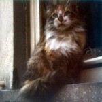 Die Katze Wuschel auf einem Fenstersims